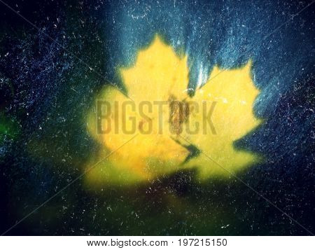 Film Effect. The Colorful Broken Leaf From Maple Tree On Basalt Stones In Blurred Water Of Mountain
