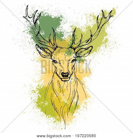Sketch by pen Noble deer front view on the background of watercolor stains