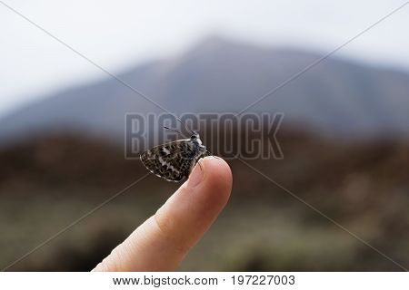 Butterfly on the little finger closeup, volcano Teide on background, Spain, Tenerife