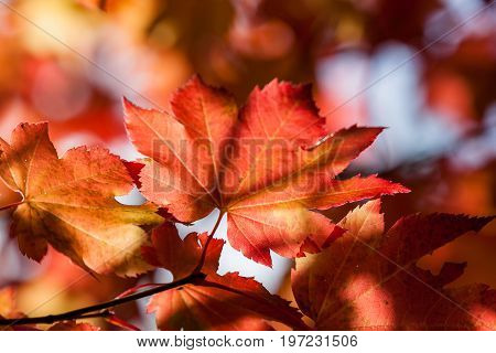 Afternoon Sun On Fall Leaves