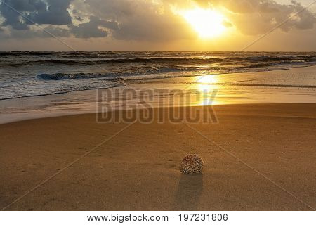 Beach With Sea Sponge On The Shore At Sunset.