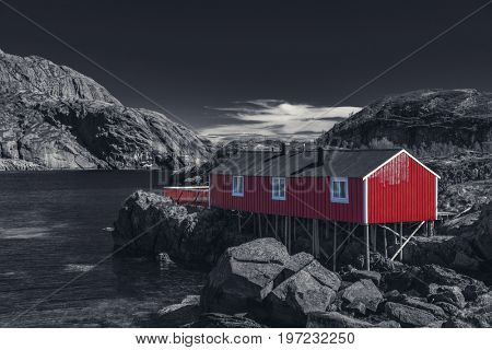 Red Classic Norwegian Rorbu fishing hut with sod roof on Lofoten islands, Nusfjord. Norwegian traditional type of house used by fishermen - Black And White Toned