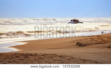 Small Gull Flying At The Beach