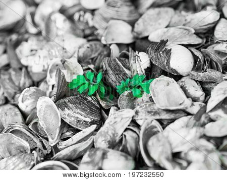 a small green plant growing out of a sea of shells