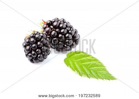 BlackBerry with leaf isolated closeup on white background.