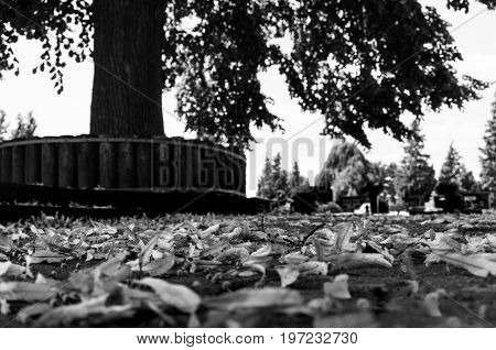 The scenery is in a park. Lots of leaves lying on the floor in front of a large tree.