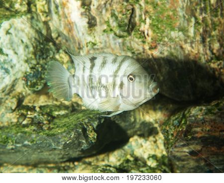 fish in an aquarium . Detailed photo in the park in the nature