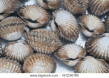 Fresh blood cockle or blood clam (Tegillarca granosa) background shell seafood.