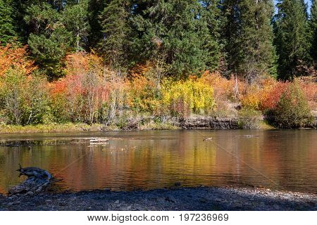 Stream With Fall Foliage