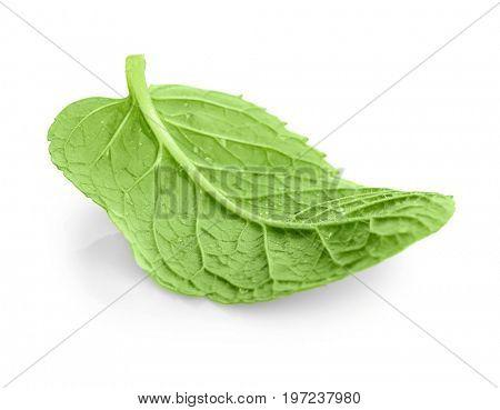 Fresh lemon balm leaf on white background