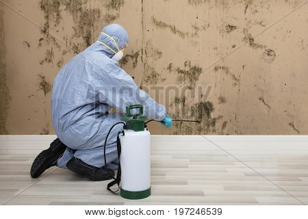 Rear View Of A Pest Control Worker In Uniform Spraying Pesticide On Wall With Sprayer
