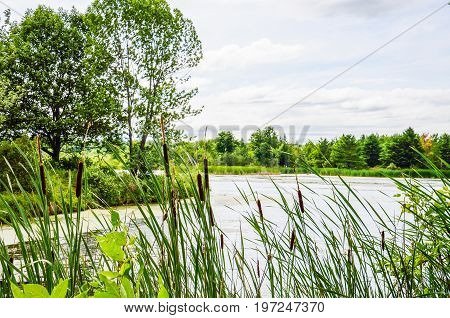 Cattail Reeds And Lake Landscape During Summer With Calm Water And Cloudy Day