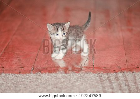 The Kitten Sits On A Carpet