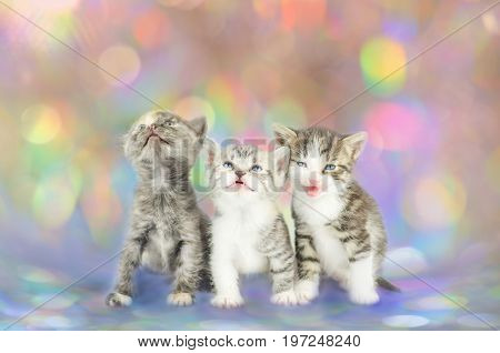 Group Of Three Little Kittens Together