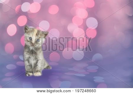 Black Kitten Sitting On Bokeh Background