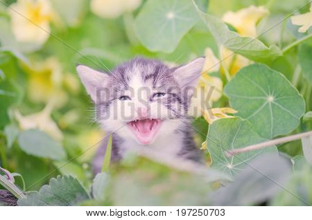 Adorable Meowing Kitten Outdoors
