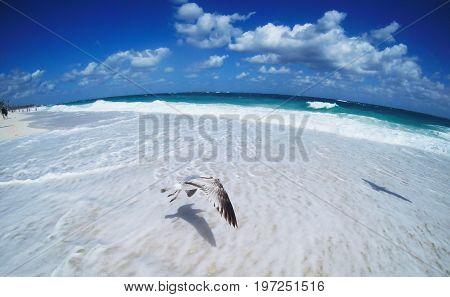 Fish-Eye photo: Flying seagulls on a tropical beach. Nassau, Bahamas.