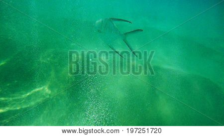 A free fish during a sunny day in Nassau, Bahamas.