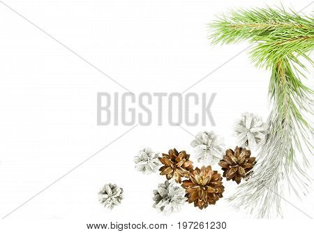 Green spruce twig with cones isolated on white