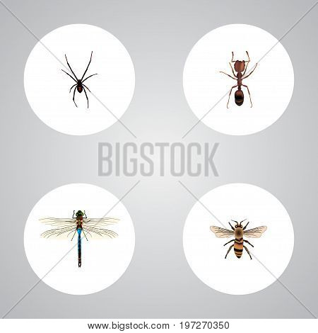 Realistic Emmet, Damselfly, Wasp And Other Vector Elements