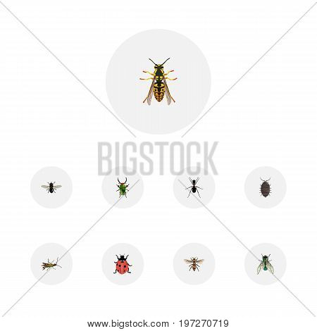 Realistic Dor, Locust, Ant And Other Vector Elements