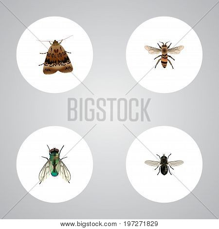 Realistic Wasp, Butterfly, Midge And Other Vector Elements