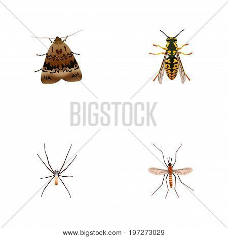Realistic Butterfly, Gnat, Spider And Other Vector Elements