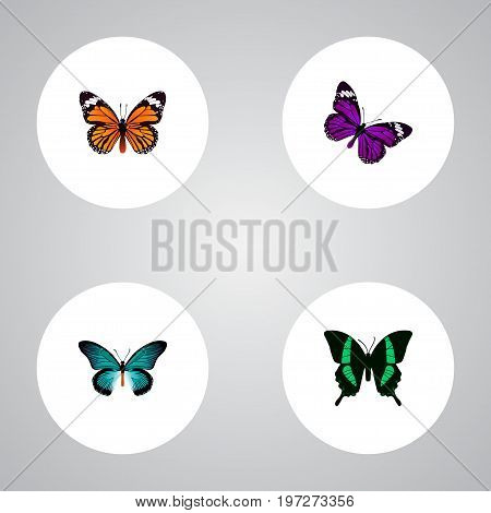 Realistic Monarch, Butterfly, Pipevine And Other Vector Elements