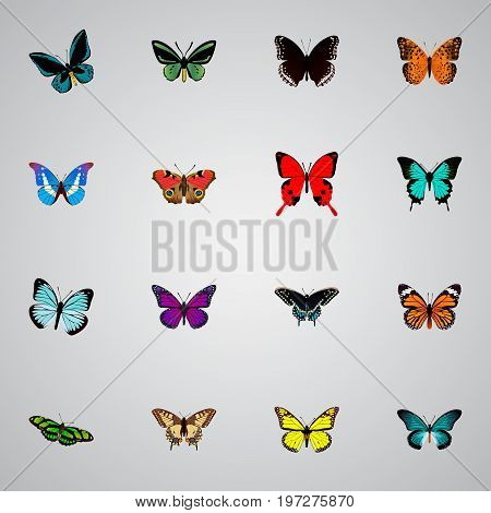 Realistic Tropical Moth, Archippus, Lexias And Other Vector Elements