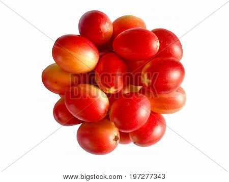 Carunda or Karonda  (Bengal-Currants) fruit isolated on white background. Carunda or Karonda  (Bengal-Currants) pink fruit on tree in the garden. Fruit for health and high vitamin. You can meet them in Thailand.