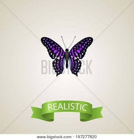 Realistic Striped Purple Crow Element. Vector Illustration Of Realistic Polyommatus Icarus Isolated On Clean Background