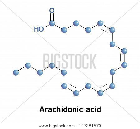 Arachidonic acid is a polyunsaturated omega-6 fatty acid. It presents in the phospholipids of membranes of the bodys cells, and is abundant in the brain, muscles, and liver