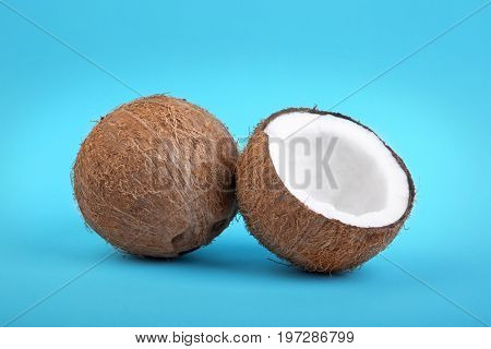 A pair of tasteful coconuts on a bright blue background. A close-up of a fresh coconut cut in half and a hard coco. Healthful summer fruits. Exotic ingredients for vegetarians.