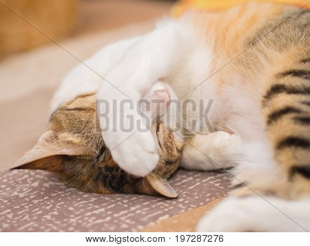 Shy Cat on Bed . . .