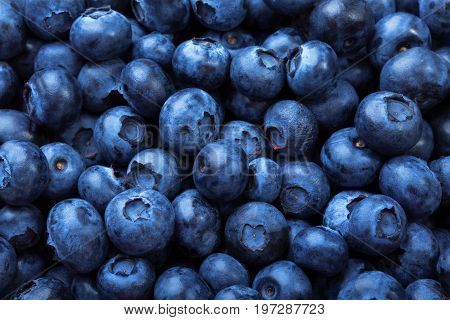 A fantastic blueberry background. A macro picture of dark and saturated blueberries. Refreshing antioxidant berries. Juicy summer berries for healthful yogurts and nutritious milkshakes.