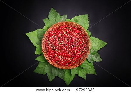 A beautiful composition of fresh, raw red currant with green leaves in a small crate on a black background. Juicy and delicious red currant in a brown basket. Healthful breakfast for vegetarians.