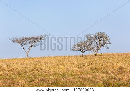 Trees Grass Field Horizon Landscape