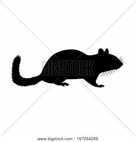 Chipmunk, or ground squirrel, or chipping squirrel, shade picture