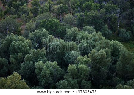 Green deciduous forest from above. Natural background.