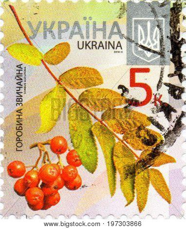 UKRAINE - CIRCA 2017: A postage stamp printed in Ukraine shows Mountain ash circa 2015
