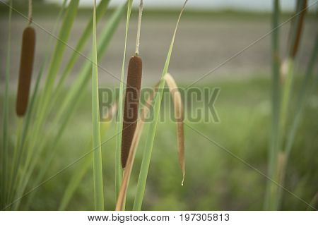 The Pond Grass