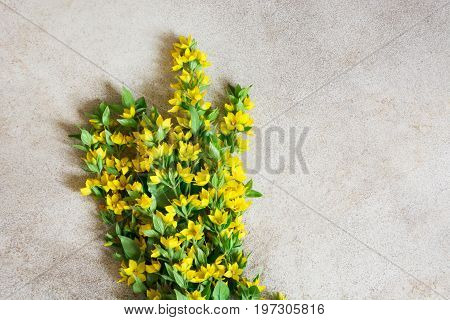 Festive yellow flower arrangement of loosestrife lysimachia on vintage background. Flat lay. View from above.