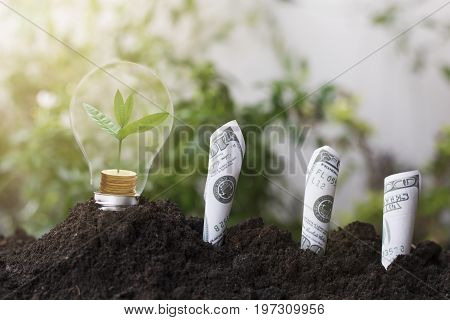 tree planting and growth up on money coin stacked on light bulb with soil and dollars banknote. concept in save World environment day reforesting eco bio arbor CSR ESG ecosystems reforestation concept