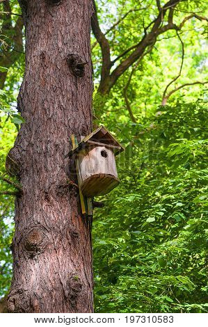 wooden birdhouse hangs on the trunk of a tree in the forest. Close-up