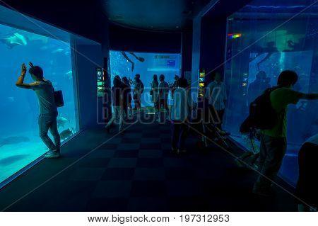 OSAKA, JAPAN - JULY 18, 2017: Unidentified people taking pictures and enjoying sea creatures at the Osaka Aquarium Kaiyukan in Osaka, Japan.