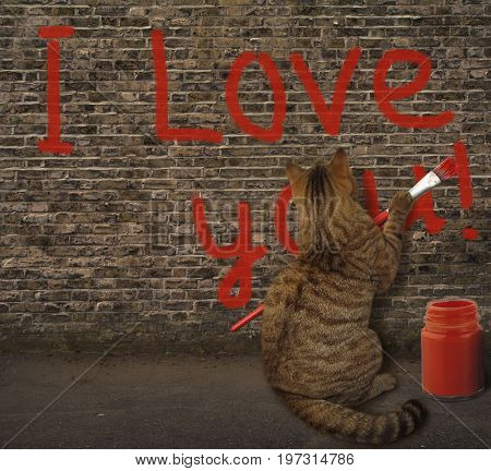 The cat wrote on the wall