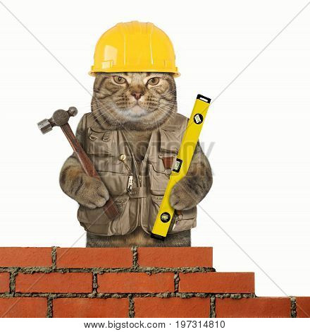 The cat builder is holding a hummer in one paw and a building level in other. White background.