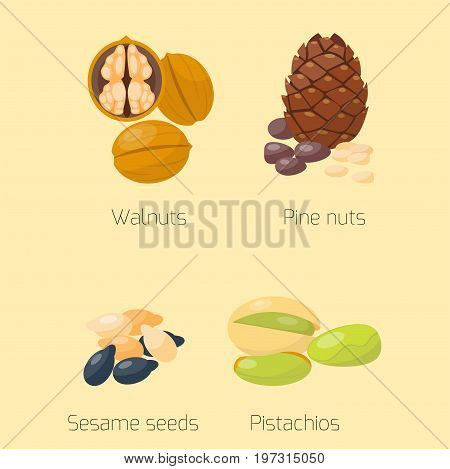 Piles of different nuts pistachio walnut cedar nut and brazil tasty seed vector illustration. Organic collection nutshell group assortment vegetarian nutrition.
