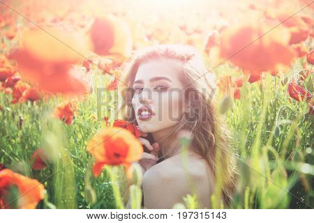 poppy seed and girl with long curly hair in red flower field with green stem on natural background summer spring drug and love intoxication opium