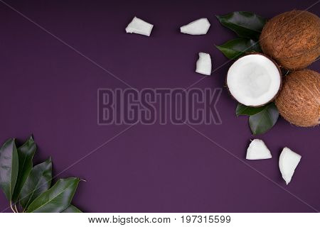 Top view of coconut on the dark purple background. Tropical and exotic nuts. Coconut pieces on a violet background. Whole, crushed and cut in halves coconuts.